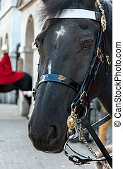 Horse of the Queens Household Cavalry in London - Horse of...