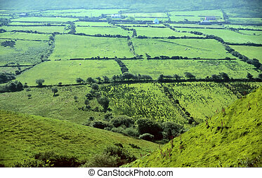 Green meadows in County Kerry, Ireland