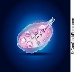 ovulação, em, a, ovário, detalhado,...