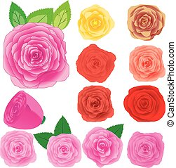 Set of different roses