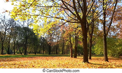 Leaf fall in beautiful autumn park in a sunny day