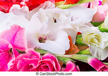 Gladiolus flower background