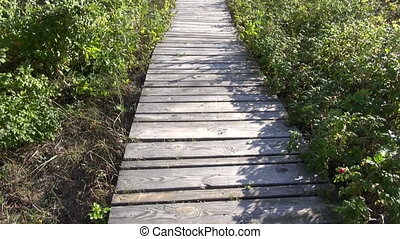 walking on wooden path way in park