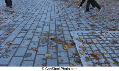 worker with leaf blowers tool clean up autumn leaves from...