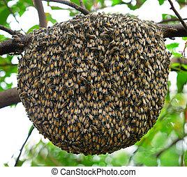 grande, árbol, Enjambre, abeja