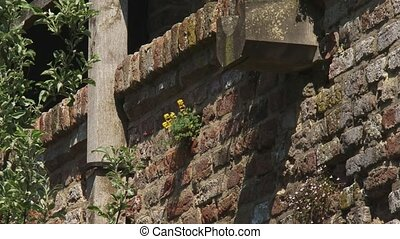 plants grow in medieval city wall - ZUTPHEN, THE NETHERLANDS...