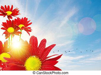Blumen-, Fruehjahr