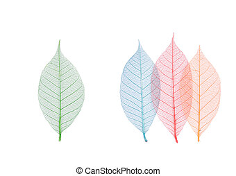 Real leaf with detail vein and various colors, decoration...
