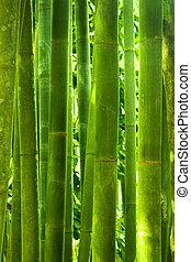bambu, floresta