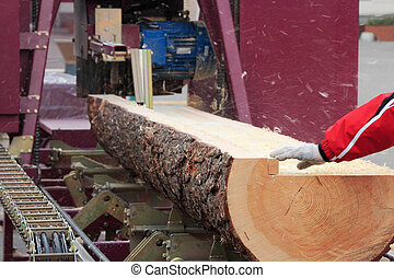 modern sawmill - Sawing boards from logs with circular...