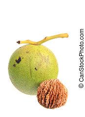 Black walnut Juglans nigra - Black walnut Juglans nigra...