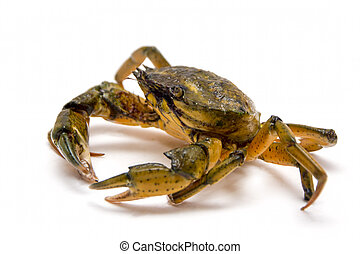 Crab on white - Crab on the white background