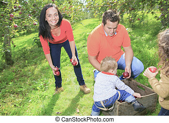 A happy family of four attractive caucasian catch apple on a...