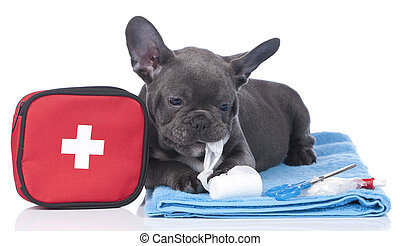 French bulldog with first aid kit isolated