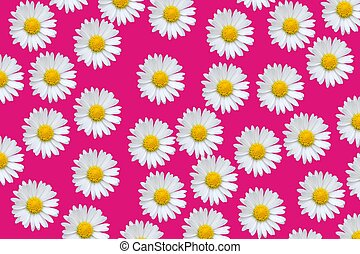 Colorful pattern with daisy flowers - Colorful pattern...