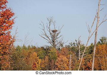 Vogels, nest,