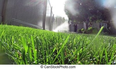 Lawn sprinkler watering grass - Oscillating lawn sprinkler...
