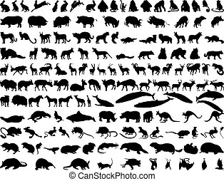 Vector animals - Big collection of different illustration...
