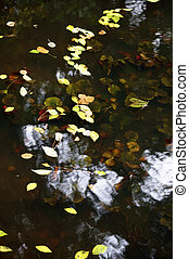 Autumn leaves on the pond