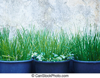 Seedlings - Rows of grass seedlings outdoor