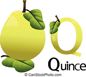 Illustrator Q font with quince