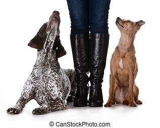 mixed breed vs purebreed - woman standing with mixed breed...