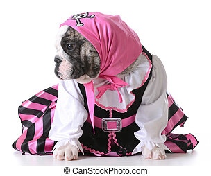 puppy pirate