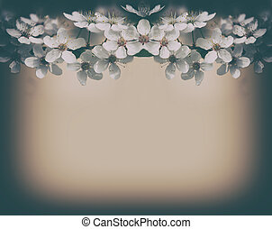 Vintage cherry blossoms background
