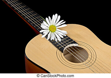 daisy on country guitar - Single white daisy on a six string...