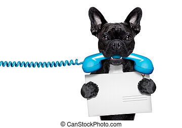 dog phone telephone - french bulldog dog holding a old retro...