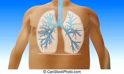 correct breath - very big man breathes correctly
