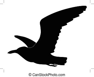 seagull - silhouette of seagull