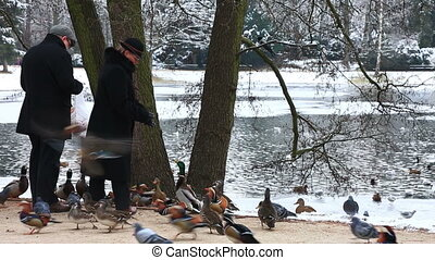 Man and the woman feed ducks in park in the winter