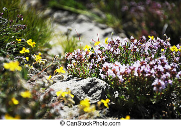 flowers and plants in the wild forest Spain