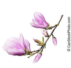 Magnolia Flowers - Digital Painting Of Magnolia Flowers...