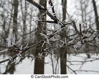 frozen branch - Crystals of ice and snow on a branch of...