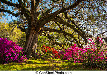 Spring Flowers Bloom at Charleston South Carolina Plantation...
