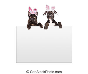 Easter Kitten and Puppy Holding Sign - A cute little black...