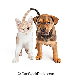 Puppy and Kitten Standing Together - A cute kitten and a...