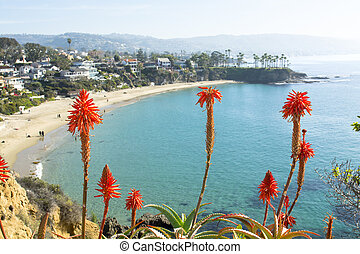 Flowers over beach cove - Bright orange Aloe Vera cactus...