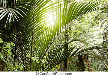 Jungle light - Sunlight shining in tropical jungle