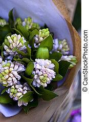 Hyacinths - Bunch of hyacinths in a flower shop