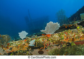 Coral Encrusted Shipwreck - Roatan, Honduras - Colourful...