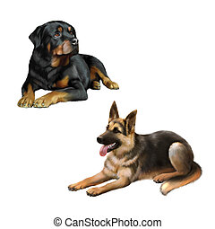 german shepard dog and Rottweiler laying down isolated on...