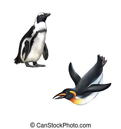 gentoo penguin Vector illustration isolated on white...