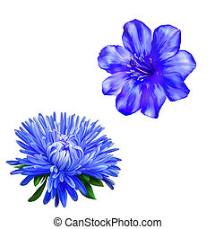 gyönyörű, kék, virág, virág, eredet, elszigetelt, virág,...
