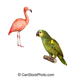 Yellow Naped Amazon Parrot, flamingo isolated on white...