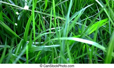 Grass under sunshine Shift macro video - Grass under...