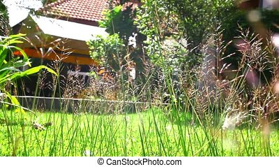 Flower grass under sunshine near house