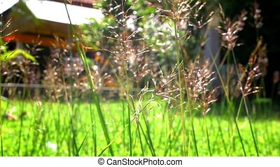 Flower grass under sunshine near house Video shift - Flower...